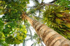 Tropical palm tee Royalty Free Stock Photography