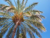 Tropical palm tree. A shot of a palm tree on a sunny day stock photography