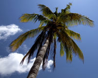 Tropical palm tree Stock Photos