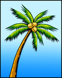 Tropical palm tree Royalty Free Stock Photos