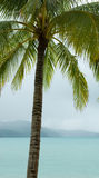 Tropical palm tree. A palm tree with blue tropical waters, mountains and clouds in the background Stock Photography