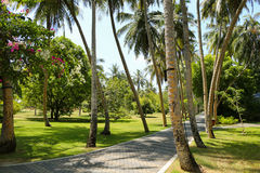 Tropical palm tree alley way leading to the sea Stock Photography