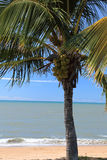 Tropical palm tree at the beach Royalty Free Stock Images