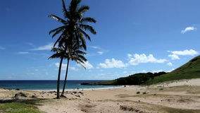 Tropical palm tree beach on easter island. Video of tropical palm tree beach on easter island stock video