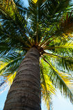 Tropical palm tree Stock Images