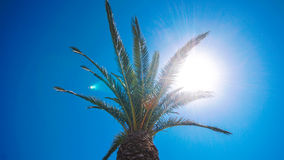 Tropical palm tree. Beautiful tropical shot of palm tree during the hot sunny day Stock Photo