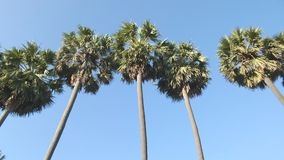 Tropical Palm Tree On Blue Sky Royalty Free Stock Image