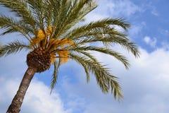 Tropical palm tree bon blue sky stock image