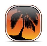 Tropical palm tree button. Illustration of tropical palm tree button with orange sunset background Stock Photography