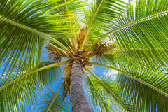 Tropical palm tree canopy against blue sky Stock Photos