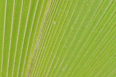 Tropical palm tree close up copy-space Royalty Free Stock Image