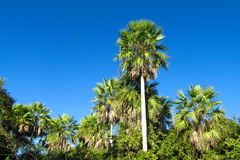 Tropical palm tree forest Stock Photo