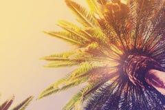 Tropical palm tree Stock Photo