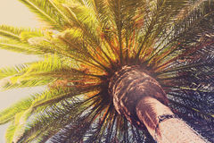 Tropical palm tree. Fresh green leaves , close up view retro toned Royalty Free Stock Image