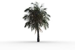 Tropical palm tree with green foilage Stock Images