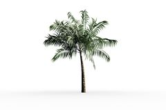 Tropical palm tree with green foilage Stock Image