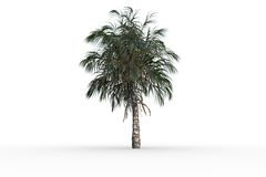 Tropical palm tree with green foilage Stock Photos