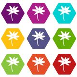 Tropical palm tree icon set color hexahedron Stock Images