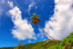 Tropical palm tree in Jamaica on Caribbean sea Royalty Free Stock Image