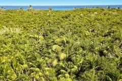 Tropical palm tree jungle Sian Kaan Tulum Stock Images