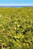 Tropical palm tree jungle Sian Kaan Tulum Stock Photos