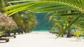 Tropical palm tree leaf in a slight breeze and tropical sandy beach in background.  stock video