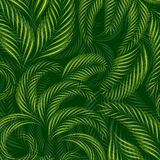Tropical palm tree leaves background, summer pattern. Royalty Free Stock Image