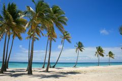 Palm Tree lined beach in Punta Cana Dominican Republic. Tropical Palm Tree lined beach in Punta Cana Dominican Republic Royalty Free Stock Image