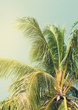 Tropical Palm Tree lit by the Sun on Beach. Toned Background Royalty Free Stock Photography