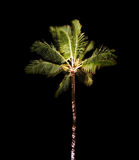 Tropical Palm Tree at Night. One single tropical palm tree at night Royalty Free Stock Photos