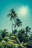 Tropical palm tree oasis in sunshine Stock Image