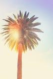 Tropical palm tree Stock Photos
