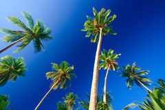 Tropical palm tree paradise Stock Images