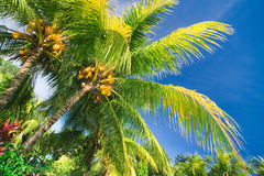 Tropical palm tree paradise Royalty Free Stock Images