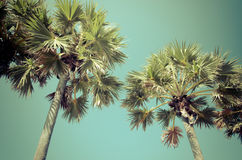 Palm Vintage tree Retro Stock Photography