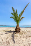 Tropical palm tree on sandy beach. Exotic palm tree with shadow on sandy beach near blue sea Stock Images