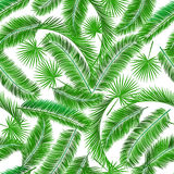 Tropical palm tree seampless pattern Stock Photo