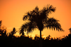 Tropical palm tree silhouette on the background of a beautiful s Royalty Free Stock Photo