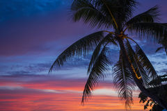 Tropical Palm Tree Silhouette At Colourful Sunset. Silhouette of a palm tree with colourful clouds in the background at sunset in Panglao, Bohol, Philippines Stock Photography