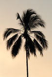 Tropical palm tree silhouette Royalty Free Stock Photography