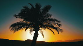 Tropical Palm Tree Silhouette on Sunset Background, and Outlines of the Mountains. Tropical Palm tree silhouette on sunset background, and the outlines of the stock video footage