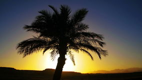 Tropical Palm Tree Silhouette on Sunset Background, and Outlines of the Mountains stock footage