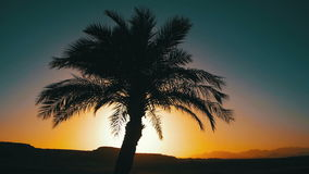 Tropical Palm Tree Silhouette on Sunset Background, and Outlines of the Mountains stock video