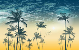Tropical palm tree silhouette  at sunset or moonlight,   with cl. Oudy sky. Highly detailed  and Stock Images