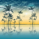 Tropical palm tree silhouette  at sunset or moonlight, with clou Stock Photo