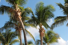 Palm tree beach and sky background. Palm tree against clouds background Stock Photography