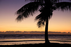 Tropical palm tree during sunset. Silhouette of a tropical palm tree in front of sunset at shore Stock Image
