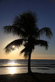 Tropical palm tree during sunset. Silhouette of a tropical palm tree in front of sunset at shore Royalty Free Stock Photography