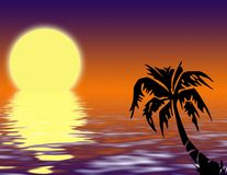 Tropical palm tree on sunset royalty free stock image