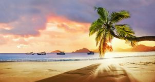 Tropical Palm Tree in the Sunshine stock photos